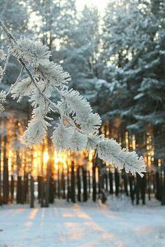 Snow...❄🌷
