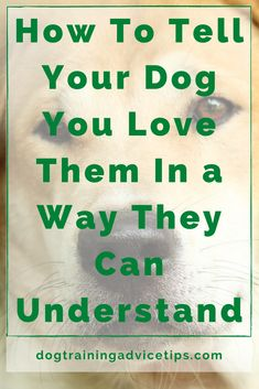 How To Tell Your Dog You Love Them In a Way They Can Understand. #dogtrainingadvicetips #dogcare #doghealth #dogtips #dogs Dog Training Books, Dog Training Tips, New Puppy, Puppy Love, Hyper Dog, Nanny Dog, Dog Health Tips, Puppies Tips, Puppy Treats