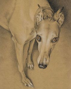 """""""Essie in Pencil No. - colored pencil on brown paper Silly Dogs, Cute Dogs, Greyhound Art, Italian Greyhound, Collages, Illustrations, Illustration Art, Dog Artist, Happy Puppy"""