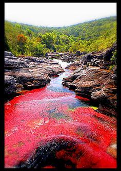 Caño Cristales River, (The Rainbow River,) Columbia