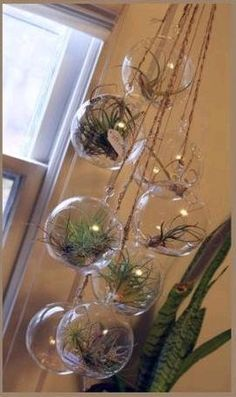 With the landscape outside beginning to bloom, we thought we should share this lovely project that brings some greenery indoors. Perfect for people with small spaces, this DIY air plant chandelier is a low cost, low maintenance way to bring some life to any empty corner of your home.