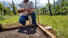 Un #semenzaio del #pomodoro Re Umberto realizzato a Tramonti, in #CostieraAmalfitana