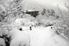 Imagini pentru winter in korea