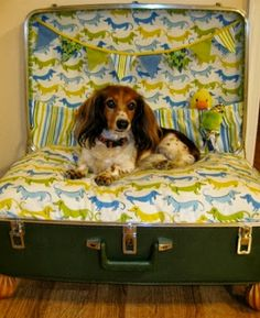 Jo-Ann Fabric and Craft Stores/ this is for my sister Teresa.How many Yorkies can you fit in a giant suite case bed? Dachshund Love, Daschund, Baby Puppies, Diy Stuffed Animals, Pet Beds, Beautiful Dogs, Dog Pictures, Puppy Love, Cute Dogs