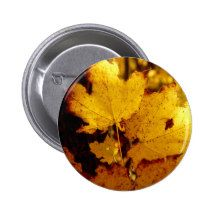 Golden Maple Leaves on St Joseph Island 2 Inch Round Button