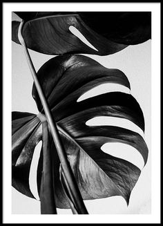 Monstera B&W one Poster in the group New in at Desenio AB (8972)