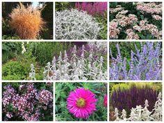 Acht planten voor een tuin op droge grond! Dream Garden, Animal Shelter, Natural Stones, Eco Friendly, Flora, Planters, Backyard, Outdoor Structures, Concept