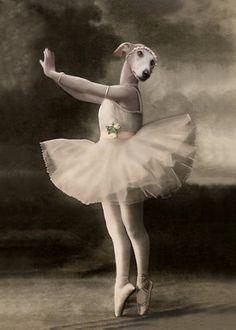 Pearl Vintage Greyhound Print Dog Ballerina Art by AnimalFancy