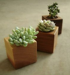 Modern Wood Succulent Planters
