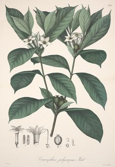 Florae Columbiae :. Berolini :Apud Ferdinandi Duemmleri Successores,1858-69..