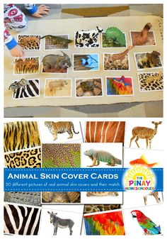 Visual discrimination activity through animal skin covers matching activity - Visual discrimination activity through animal skin covers matching activity montessori Animal Skin Covers Sensorial Matching Activity for Preschoolers - Animal Activities For Kids, Montessori Activities, Kindergarten Activities, Preschool Activities, Jungle Theme Activities, Dear Zoo Activities, Montessori Homeschool, Montessori Materials, Animal Coverings