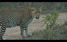 Karula,  what are you thinking,  screenshot from safari live,  2.01.16