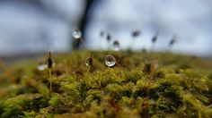 Macro of droplets in moss