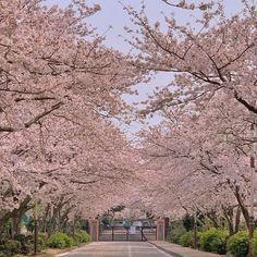 ꒰ 💌 ꒱┊𝚙𝚒𝚗𝚝𝚎𝚛𝚎𝚜𝚝: 𝚘𝚔𝚊𝚢𝚢𝚟𝚒𝚟 Range Over, Plants Are Friends, Past Tense, Scenery, Destinations, Relax, Tours, Japan, Explore