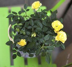 A leggondosabb hobbikertész sem kerülheti el időnként a bosszúságot, ami azzal jár, hogy kedves növényeit megtámadja valamilyen kórokozó. Nem kell permetezőhöz nyúlni! Terrarium, Herbs, Gardening, Muffin, Plant, Balcony, Terrariums, Lawn And Garden, Herb