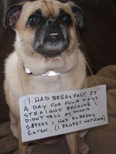 Um this is not dog shaming, that human just shamed him/herself: 1. DOGS CAN'T TALK. And B. if you offer a dog food, they WILL eat it so its the HUMAN'S fault that he/she fed him twice. Imbecile.