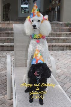 Louie and Julia - We're celebrating Julia's birthday today!!!!!