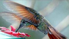 imagenes de la naturaleza con animales y plantas - Buscar con Google