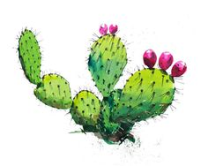 Hey, I found this really awesome Etsy listing at https://www.etsy.com/listing/226769077/prickly-pear-cactus