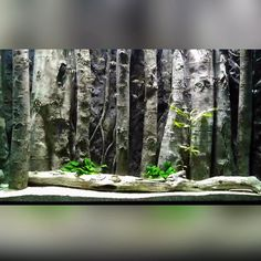 The aquarium is decorated with our E15 slim 3d background model #aquadecor #aquascaping #malawicichlids #tanganyikacichlids  #3dbackgrounds #aquarium #customaquarium #cichlids #cichlidfish #cichlidsofinstagram #fish #fishtank #instafish #frontosa #tropheus #mbunacichlids #haps #tropicalfish #aquaria #freshwateraquarium #watertank #angelfish #discusfish #plantedtank #plantedaquarium #freshwatertank #aquariumequipment #aquascape #aquariumideas #aquascapeideas Betta Fish Tank, Aquarium Fish Tank, Planted Aquarium, Cichlid Aquarium, Fish Aquarium Decorations, Aquarium Setup, Aquarium Design, Paludarium, Vivarium