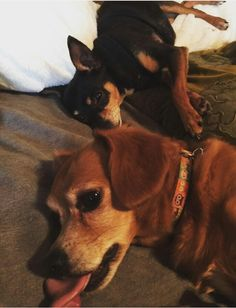Carrie's doggies Ace and Penny
