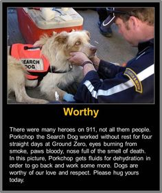 "Search Dog: ""Porkchop."" ~ ""One of The Four-Legged 'HEROES' at Ground Zero."" (9/11.)"