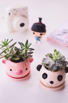 Meus novos vasos fofos em formato de porquinho e panda *-* Ficaram ainda mais lindos com essas suculentas. Tem mais detalhes e informações no blog www.omundodejess.com