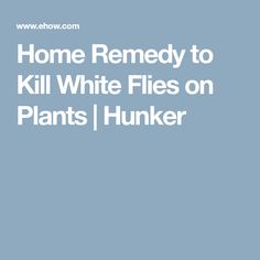 Home Remedy to Kill White Flies on Plants | Hunker