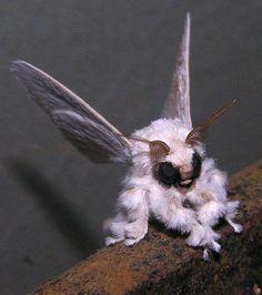 L'étrange papillon de nuit-caniche vénézuélien dévoilé sur Flickr (Crédits : Arthur Anker)