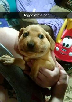 636 Best Funny Dog Pictures Images On Pinterest In 2018 Hilarious Cute Funny Animals And Cutest Animals
