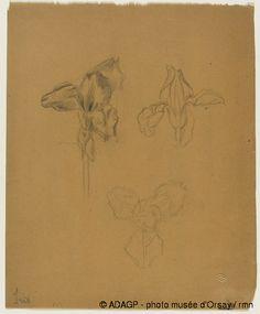 Lalique - Trois Etudes de Fleurs D'Iris
