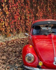 Volkswagen Beetle Vintage, Beetle Car, Vintage Auto, Vintage Cars, Van Vw, Secret Secret, Simply Red, Vw Beetles, Bugs
