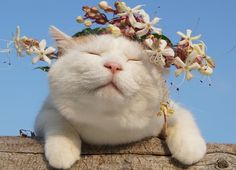 """Shironeko: """"Flowers are preferred for meditation. I Love Cats, Cool Cats, Crazy Cats, Pretty Cats, Beautiful Cats, Fluffy Animals, Cute Animals, Kittens Cutest, Cats And Kittens"""
