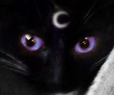 mystical kitty discovered by 🌓 inactive on We Heart It – adowbowl – dibujo Cat Aesthetic, Purple Aesthetic, Aesthetic Grunge, Aesthetic Photo, Aesthetic Pictures, Japanese Aesthetic, Cat Ideas, The Villain, Cat Memes
