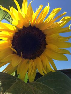 De zonnebloem staat voor LEVENSLUST. Zonnebloemen hebben een vrolijke en fleurige uitstraling en er wordt gezegd dat de manier waarop de zonnebloem naar de zon draait symbool staat voor diepe loyaliteit en uithoudingsvermogen, levenslust, bewondering en kracht.