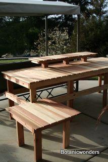 Bonsai Display Table. Tavolo principale: 250cm lunghezza, 85cm larghezza, 83cm altezza