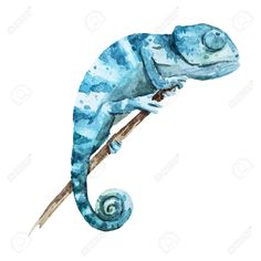 40001497-Beautiful-image-with-nice-watercolor-chameleon-Stock-Vector.jpg (1300×1300)