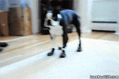 You have to watch this poor, poor dog...