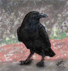 raven by aernath on DeviantArt