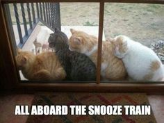 Funny pictures about Kitty Snooze Train. Oh, and cool pics about Kitty Snooze Train. Also, Kitty Snooze Train. I Love Cats, Crazy Cats, Cute Cats, Funny Cats, Funny Animals, Cute Animals, Animal Jokes, Animal Funnies, Animals Images
