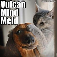 My mind to your mind… (except, Vulcat looks more intense, William Shatdog looks kinda confused)