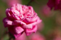 Rosegarden Rome Italy