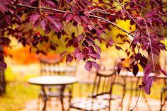 Gorgeous leaves in Zila Longenecker photo from Flickr