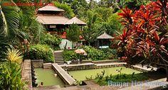 The Banjar hot springs are in the hills above Lovina beach. This natural hot spring is located in the north of Bali. This Hot Spring believed can heal the disease. Its water is accommodated at one small swimming pool encircled by unique rural nature, its situation close to the Wihara (Buda Temple). Banjar Hot Water is located in Banjar Countryside, Banjar sub district and Singaraja Regency. It is about 1,5 Km from Banjar or 24 Km from Singaraja Town.