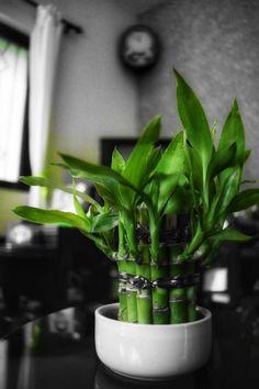 20 plantes parfaites pour salle de bain qui poussent avec peu / pas de lumière Calathea, Plante Zz, Decoration Plante, Green, Plants, Diy, Jungles, Garden, Crochet Pillow