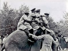 7th August 1937  Elephant riders