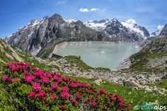 In the alps July is the perfect time to capture the beautiful blooms of rhododendrons on the altitude of 2000 meters. In this case i used a fisheye 15mm to embrace this perfect bouquet, well contrasted with the other colors of the summer, blue and green