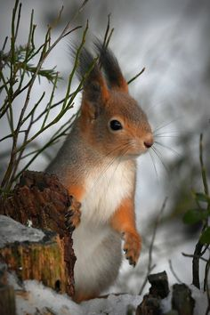 Forest Animals, Nature Animals, Animals And Pets, Squirrel Pictures, Cute Animal Pictures, Amazing Animals, Animals Beautiful, Cute Baby Animals, Funny Animals
