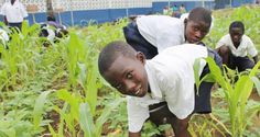 The Edible Garden: A Delicious and Healthy Teaching Approach #summerlearning