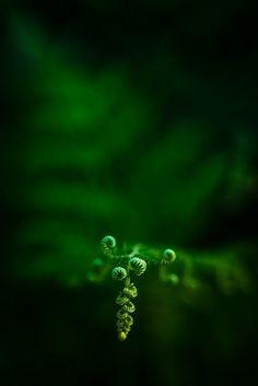 Fern   Flickr - Photo Sharing!
